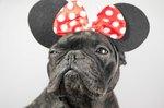 105 Disney Names For Female Dogs