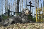 Is It Okay To Walk My Dog In A Cemetery?