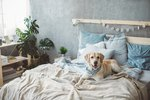 How to Stop a Dog From Peeing & Pooping on the Bed