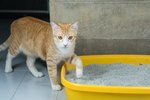 How Does Ammonia From Cat Urine Hurt Humans?