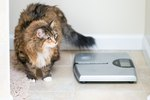 Average Weight of a Cat