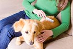 How to Remove Dead Fleas From a Dog