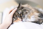 Home Remedies for a Cat's Upset Tummy