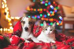 How to Include Your Pets in The Holiday Fun