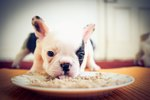 What Do 4-Week-Old Puppies Eat?