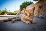 21 Amazing Facts About Cats That You Never Knew