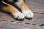 What Does a Fur Discoloration of Paws Mean?