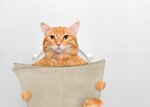 Yes, You Can Toilet Train A Cat & Here's How