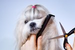How Often Should I Groom My Dog?