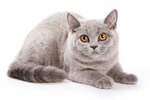 110 Names for Grey Cats