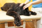 Does Your Dog Need a Massage? Try These Top Techniques That You Can Do at Home