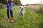 How Your Mood and Behavior Affect Your Dog