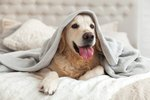 What to Know About Dogs in Heat