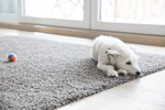 How to Keep a Dog From Chewing the Carpet