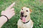 9 Common Dog Training Mistakes You Might Be Making