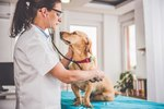 The Top 10 Mistakes We Make With Our Pets, According To Veterinarians