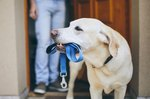 Signs That Worms Are Leaving the Dog