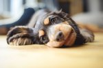 How Long Does It Take For A Puppy Wormer To Work?