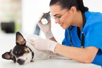 Treatment for Dog Psoriasis