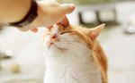 Why Do Cats Like Being Pet on Their Heads?