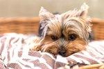 Calming Behaviors in Dogs