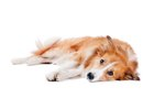 Signs & Symptoms of Blood Clots in Dogs