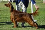 Top Dog Shows in the United States