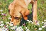Herbs or Flowers That Repel Dogs