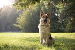 300 Popular German Shepherd Dog Names