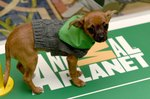All The Best Highlights From Puppy Bowl XIII