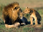 12 Facts About Animal Dads To Share With Your Father