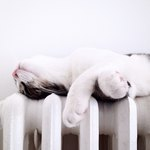 Why Do Cats Like Sleeping on Warm Things?