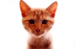 Orange Tabby Cat Behaviors