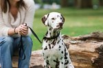What Are the Causes of Dark Spots on a Dog's Skin?
