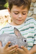 How Do I Know My Rabbit Is in Heat & Ready to Breed?