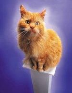 The Temperament of Orange Tabby Cats