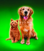 Common Uses for Sulfur to Kill Fleas