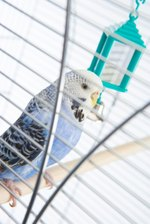 How to Build a Wire Bird Cage