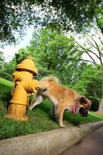 How to Stop Your Dog From Urinating on Concrete