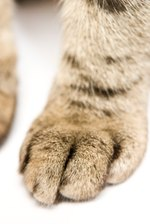 How to Clean a Cat's Paw