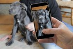 Want Better Pet Photos This Christmas? Follow These Simple Tips