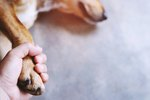 What Are the Causes of Dogs Vomiting White Foam?