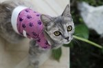 How to Make a Saline Solution for a Cat's Wound Care