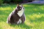 A New Report Reveals These States Have the Fattest Cats and Dogs