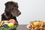 How to Lower Cholesterol in Dogs