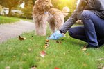 Types of Worms in Dog Poop