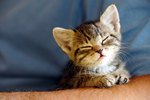 The 300 Best Male Cat Names For Your Newly-Adopted Kitten