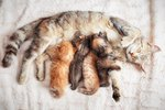 Behavior of a Mother Cat Who Just Gave Birth