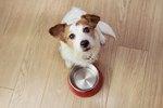 How Often Should I Feed My Dog?