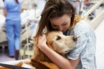 Study: Therapy Dogs Reduce Anxiety in ER Patients